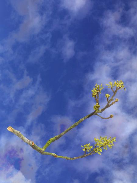 TreesFlower_01