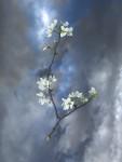 TreesFlower_08
